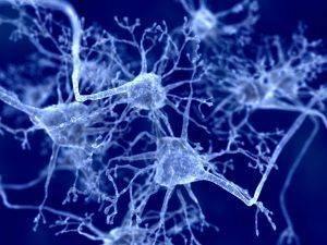 nejrony-mozga