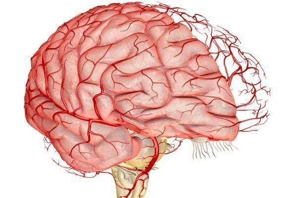 sosudy-golovnogo-mozga